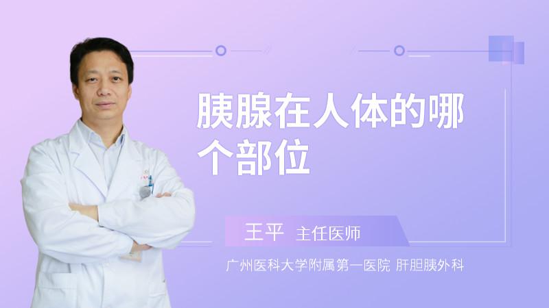胰腺在人体的哪个部位