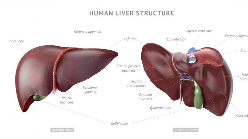 肝脏开始病变,上厕所会有这四个症状,若一个不占,恭喜肝脏还健康