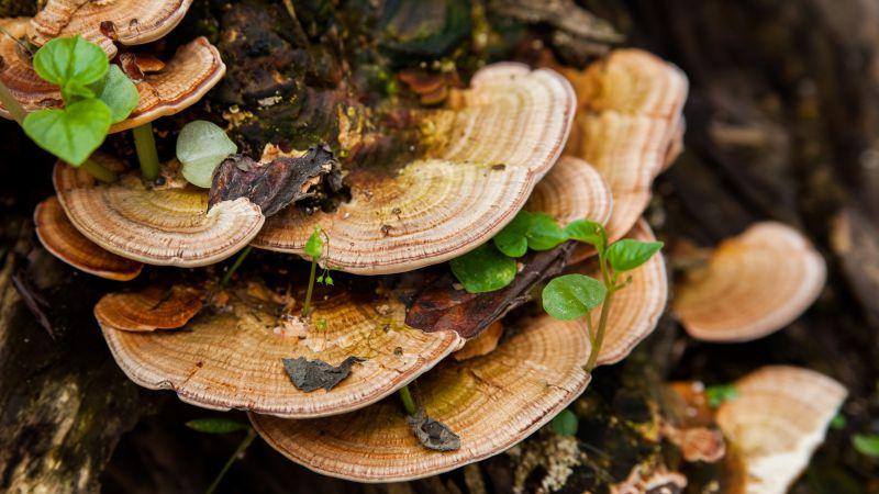 误食有毒蘑菇怎么办?送医治疗需及时!