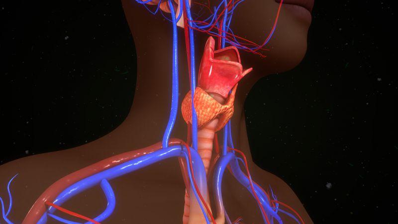 甲状旁腺素高的症状